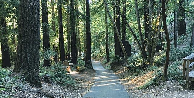 Sanborn County Park in Saratoga California