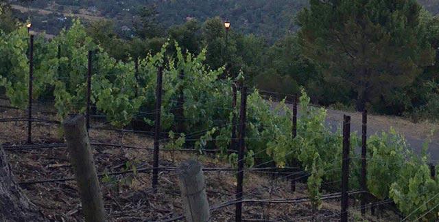 Saratoga California The Mountain Winery